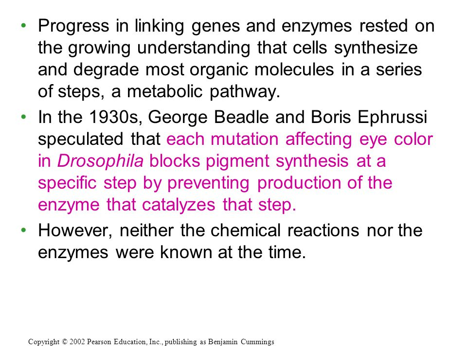 Progress in linking genes and enzymes rested on the growing understanding that cells synthesize and degrade most organic molecules in a series of steps, a metabolic pathway.