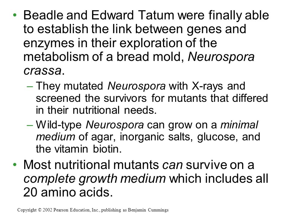 Beadle and Edward Tatum were finally able to establish the link between genes and enzymes in their exploration of the metabolism of a bread mold, Neurospora crassa.