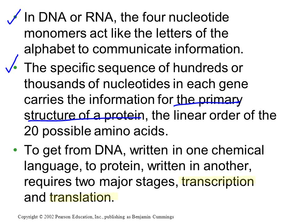 In DNA or RNA, the four nucleotide monomers act like the letters of the alphabet to communicate information.