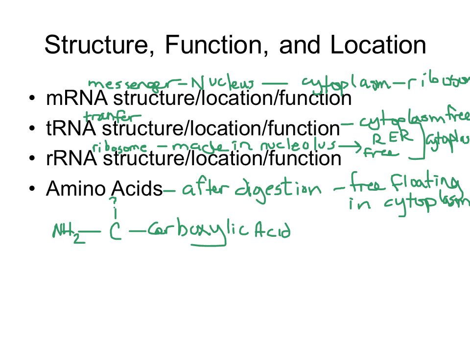 Structure, Function, and Location