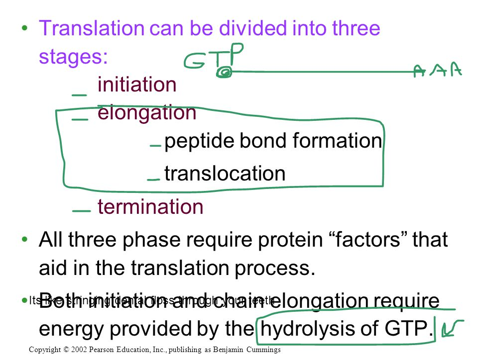 Translation can be divided into three stages: initiation elongation