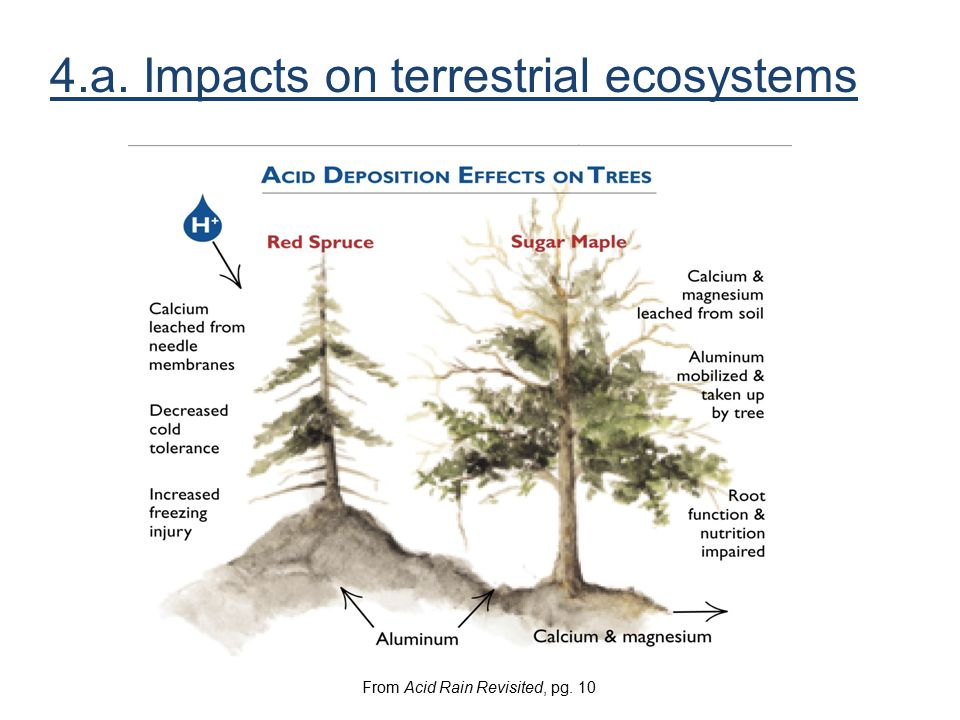 4.a. Impacts on terrestrial ecosystems