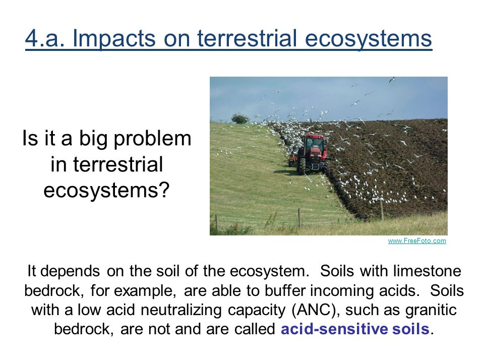 Is it a big problem in terrestrial ecosystems