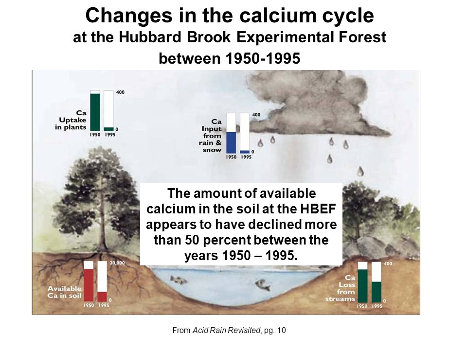 Changes in the calcium cycle at the Hubbard Brook Experimental Forest between 1950-1995