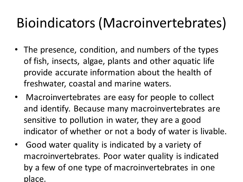 Bioindicators (Macroinvertebrates)