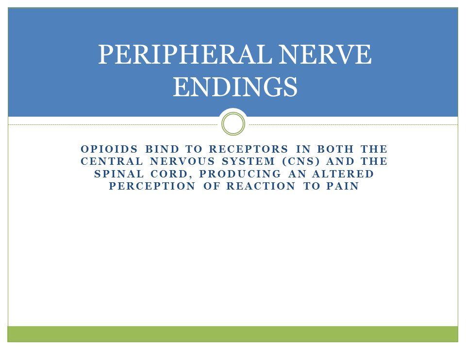 PERIPHERAL NERVE ENDINGS