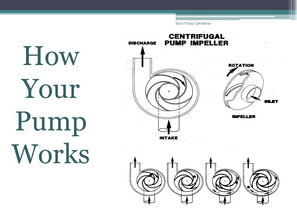 Basic Pump Operations How Your Pump Works