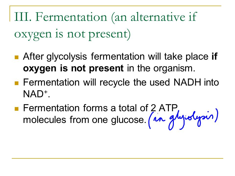 III. Fermentation (an alternative if oxygen is not present)