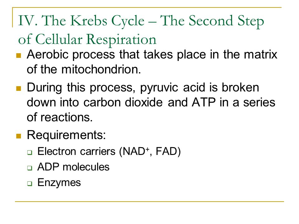 IV. The Krebs Cycle – The Second Step of Cellular Respiration