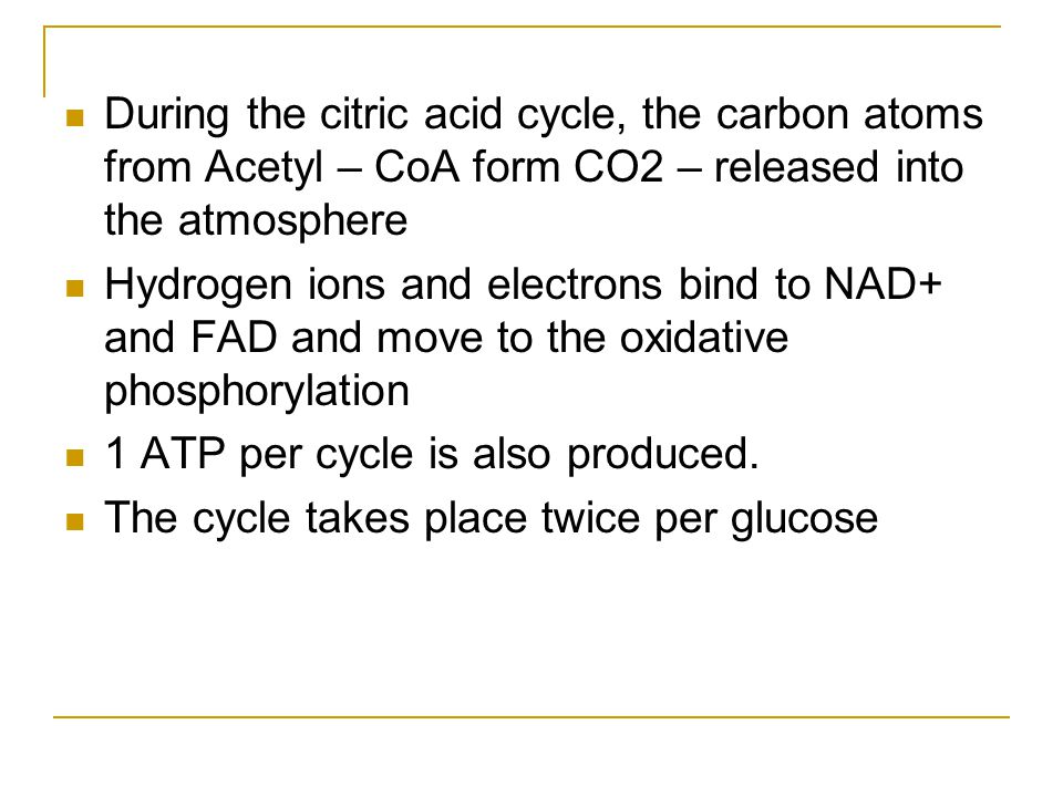 During the citric acid cycle, the carbon atoms from Acetyl – CoA form CO2 – released into the atmosphere