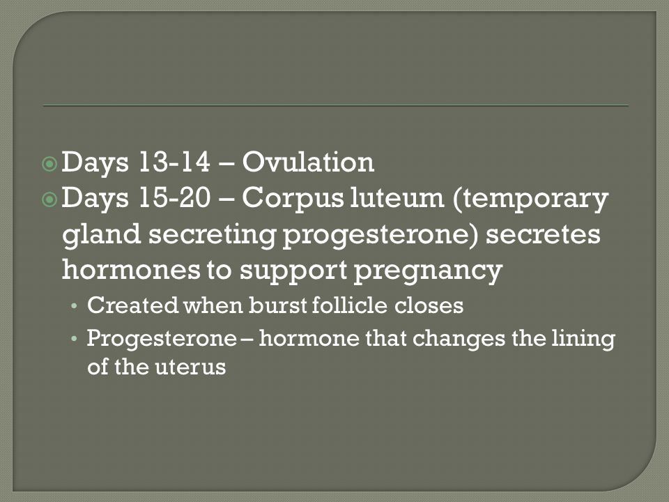 Days 13-14 – Ovulation Days 15-20 – Corpus luteum (temporary gland secreting progesterone) secretes hormones to support pregnancy.