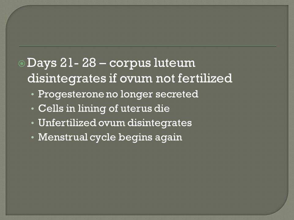 Days 21- 28 – corpus luteum disintegrates if ovum not fertilized