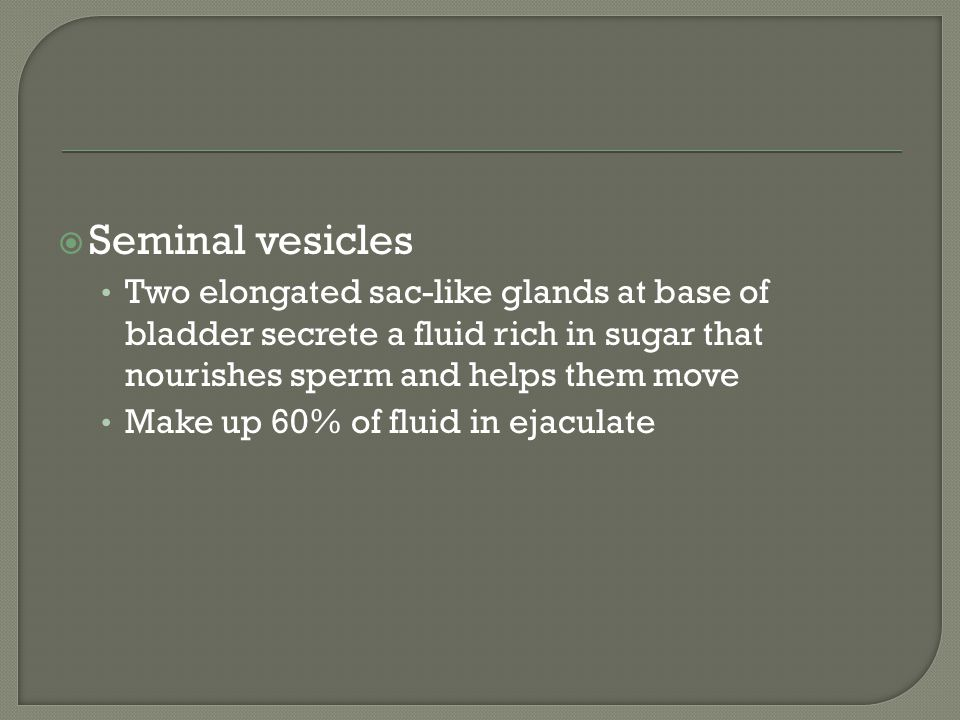 Seminal vesicles Two elongated sac-like glands at base of bladder secrete a fluid rich in sugar that nourishes sperm and helps them move.