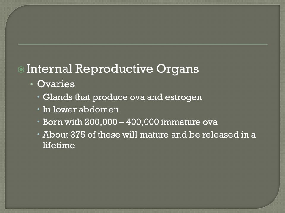 Internal Reproductive Organs