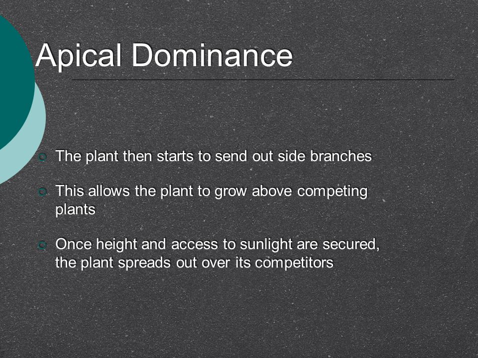 Apical Dominance The plant then starts to send out side branches