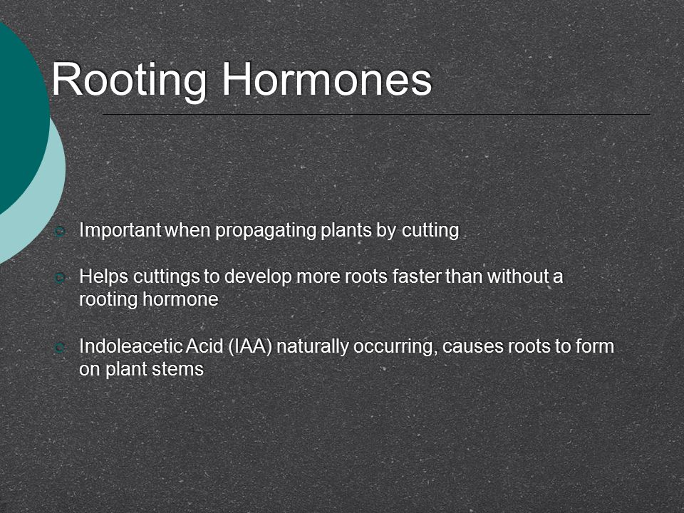 Rooting Hormones Important when propagating plants by cutting