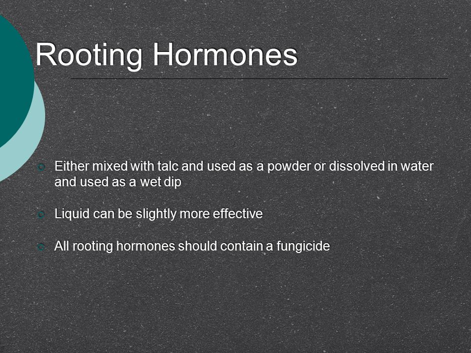 Rooting Hormones Either mixed with talc and used as a powder or dissolved in water and used as a wet dip.