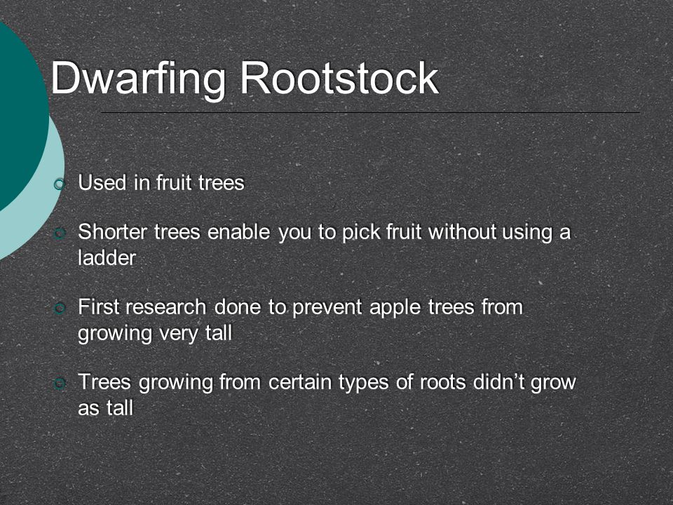 Dwarfing Rootstock Used in fruit trees
