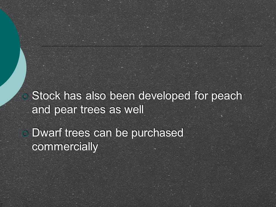 Stock has also been developed for peach and pear trees as well
