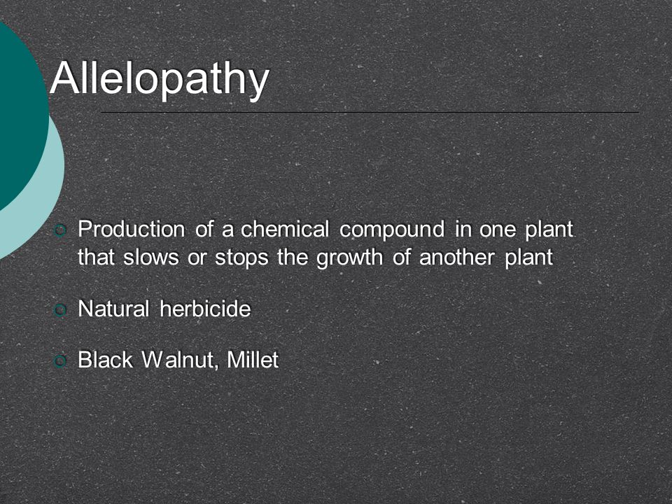 Allelopathy Production of a chemical compound in one plant that slows or stops the growth of another plant.