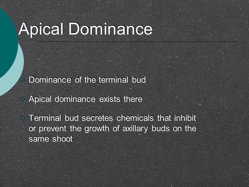 Apical Dominance Dominance of the terminal bud