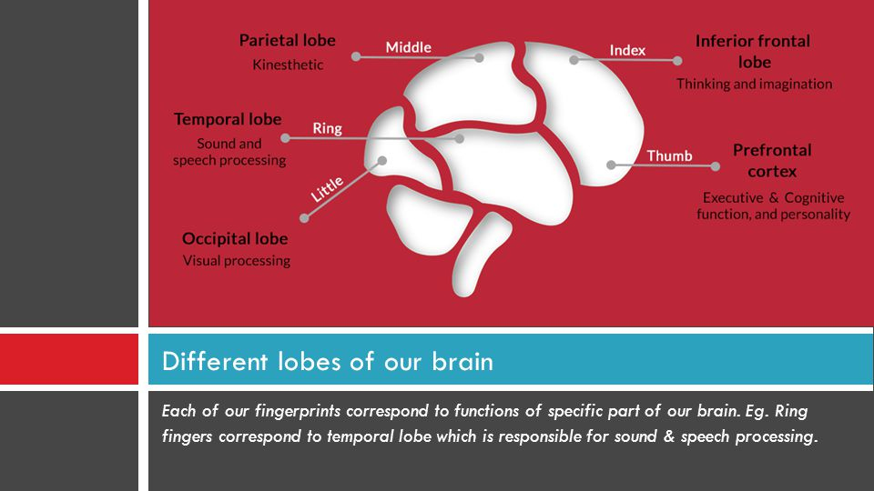 Different lobes of our brain