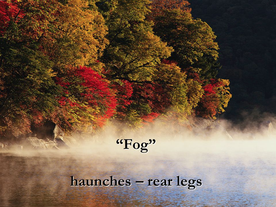 Fog haunches – rear legs