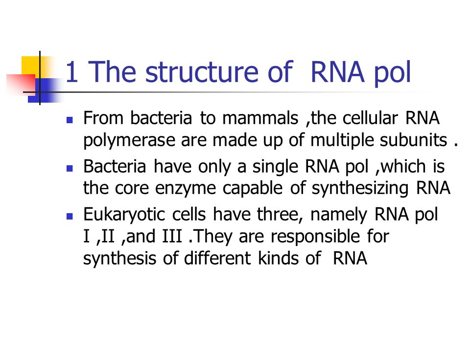 1 The structure of RNA pol