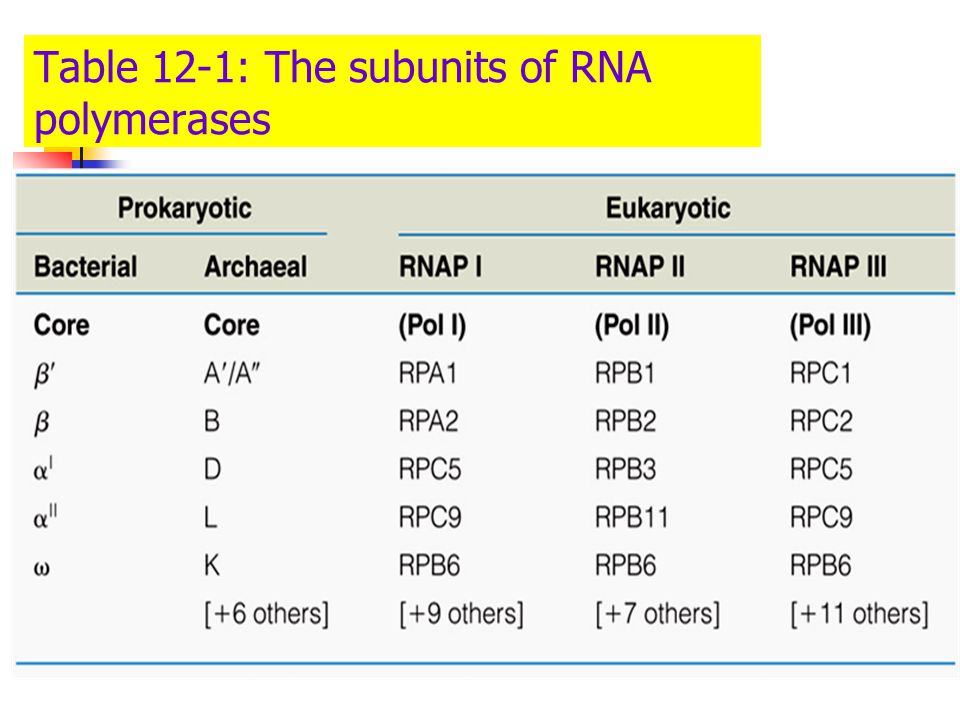 Table 12-1: The subunits of RNA polymerases