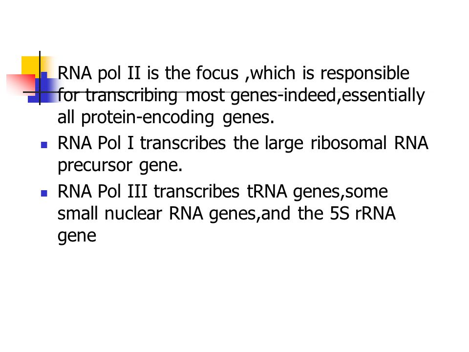 RNA pol II is the focus ,which is responsible for transcribing most genes-indeed,essentially all protein-encoding genes.