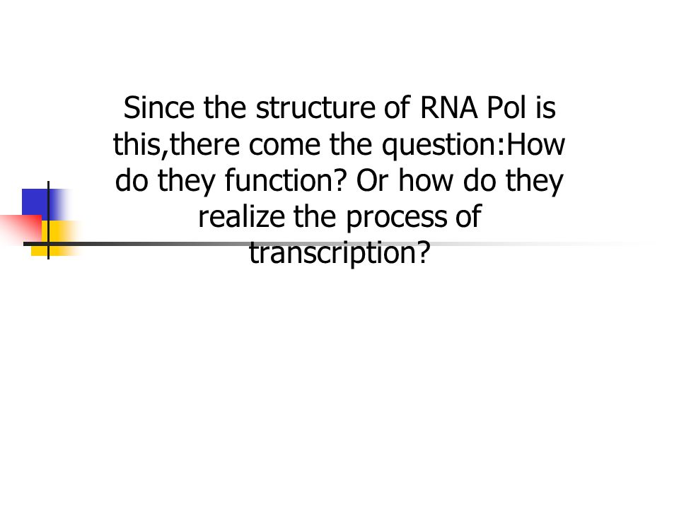 Since the structure of RNA Pol is this,there come the question:How do they function.