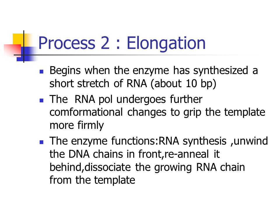 Process 2 : Elongation Begins when the enzyme has synthesized a short stretch of RNA (about 10 bp)
