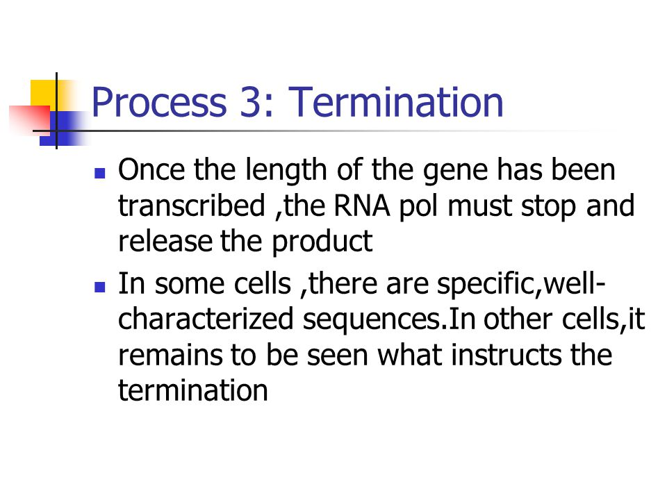 Process 3: Termination Once the length of the gene has been transcribed ,the RNA pol must stop and release the product.