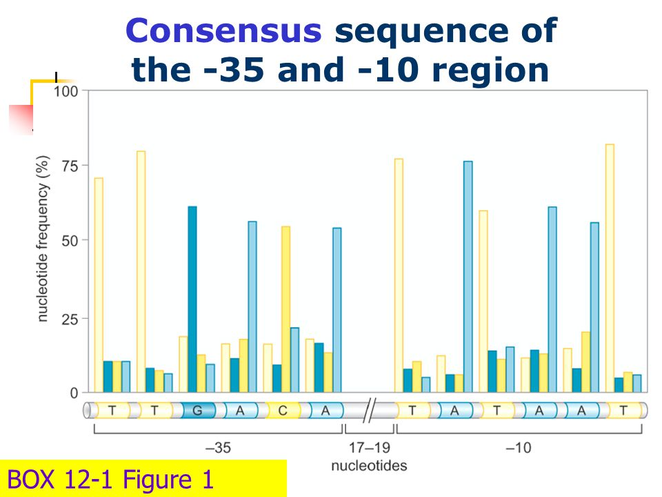 Consensus sequence of the -35 and -10 region