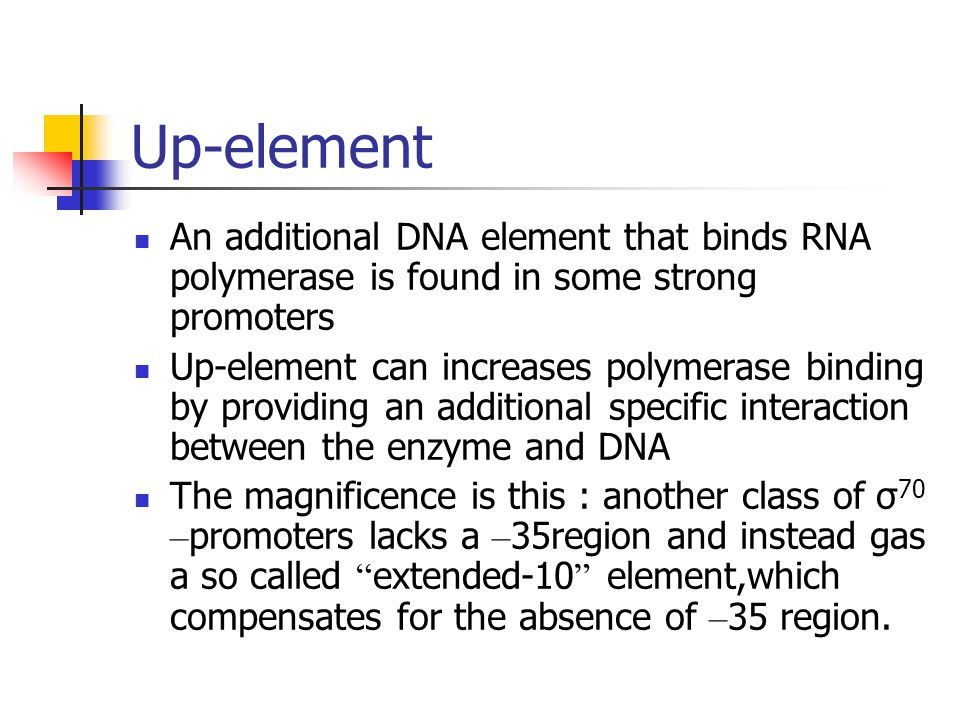 Up-element An additional DNA element that binds RNA polymerase is found in some strong promoters.