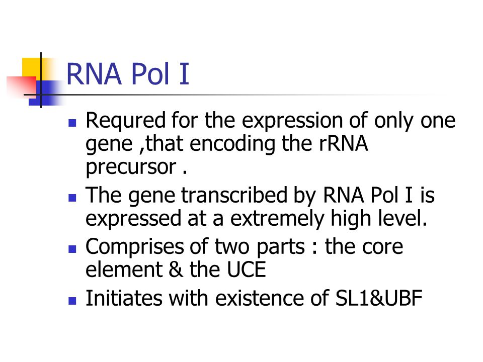 RNA Pol I Requred for the expression of only one gene ,that encoding the rRNA precursor .