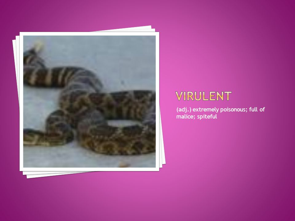 virulent (adj.) extremely poisonous; full of malice; spiteful