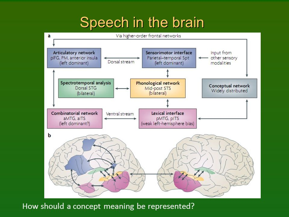 Speech in the brain How should a concept meaning be represented
