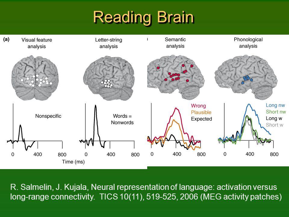 Reading Brain