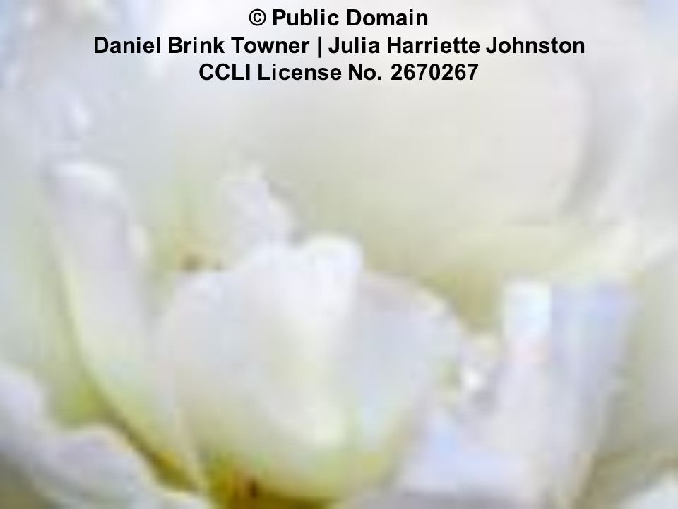 © Public Domain Daniel Brink Towner | Julia Harriette Johnston CCLI License No