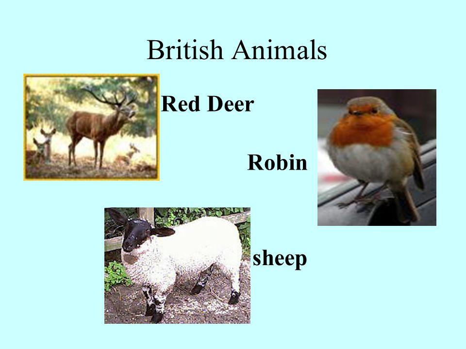 British Animals Red Deer Robin sheep