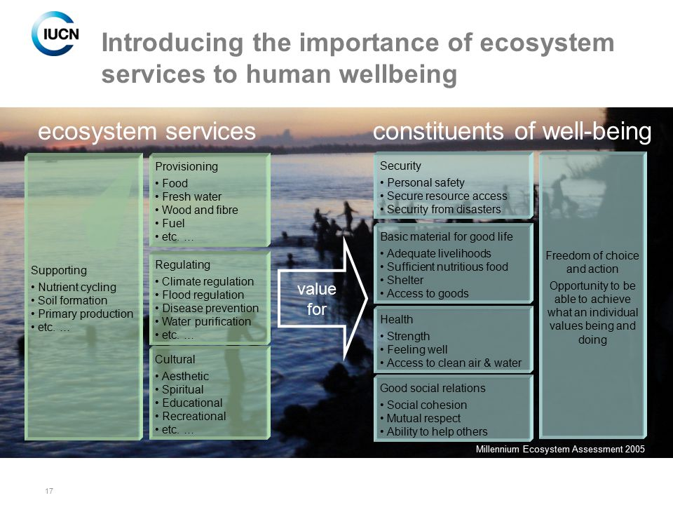 Introducing the importance of ecosystem services to human wellbeing