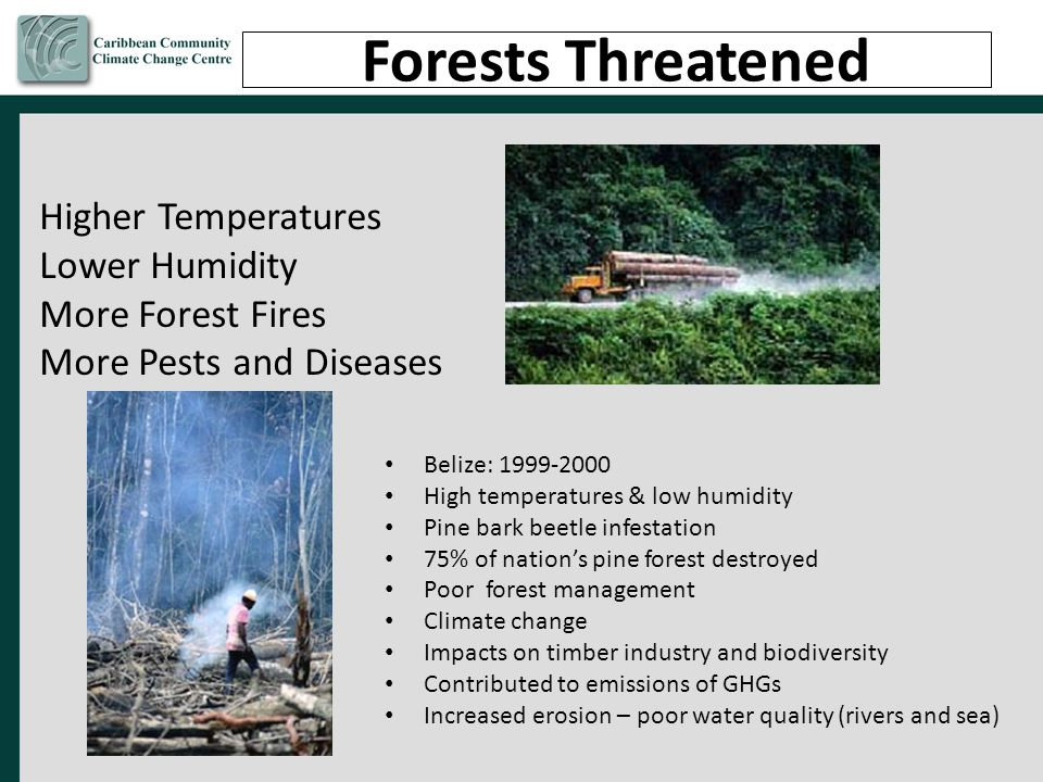 Forests Threatened Higher Temperatures Lower Humidity
