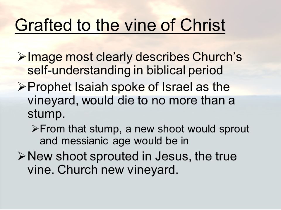 Grafted to the vine of Christ