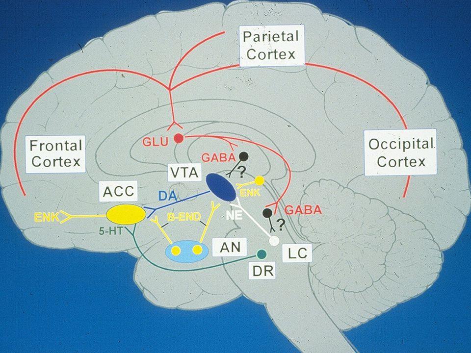 Addiction Is Brain disease