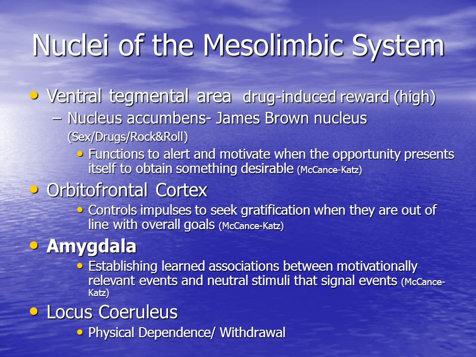 Nuclei of the Mesolimbic System