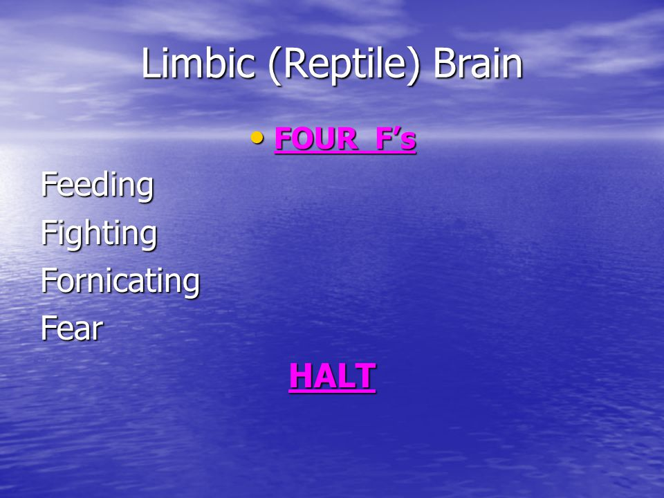 Limbic (Reptile) Brain