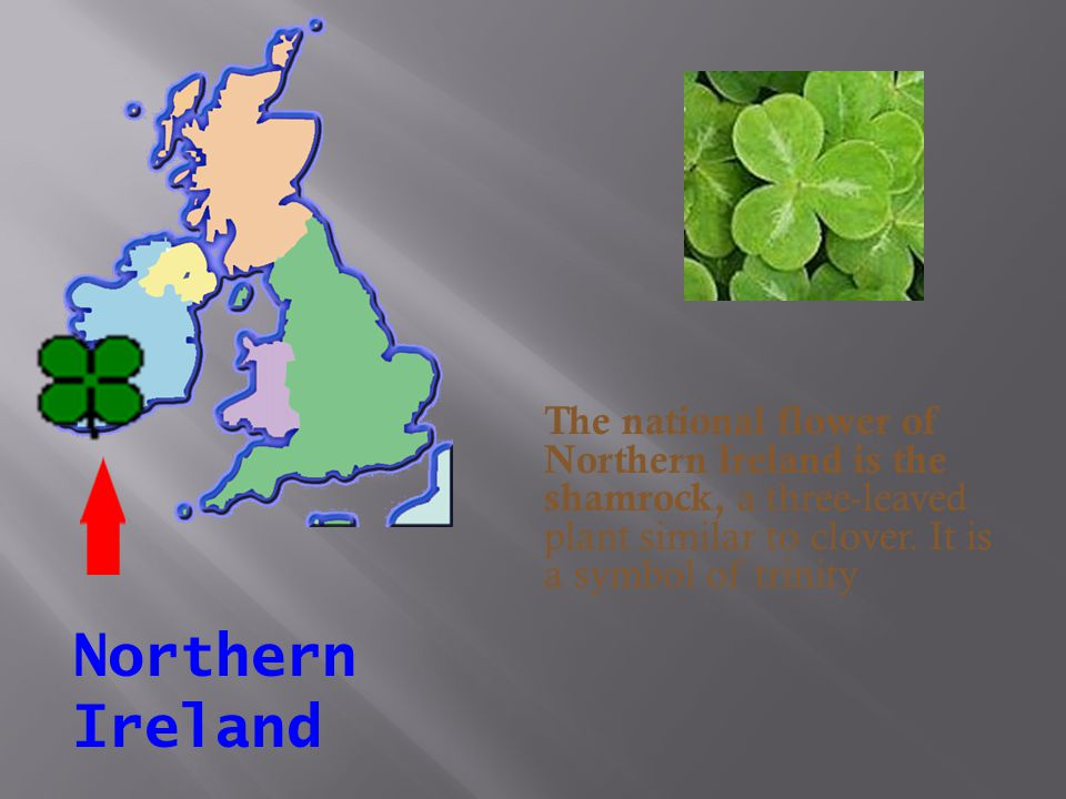 The national flower of Northern Ireland is the shamrock, a three-leaved plant similar to clover. It is a symbol of trinity
