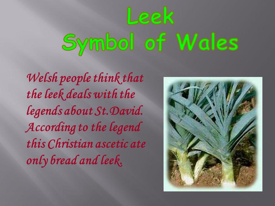 Leek Symbol of Wales.