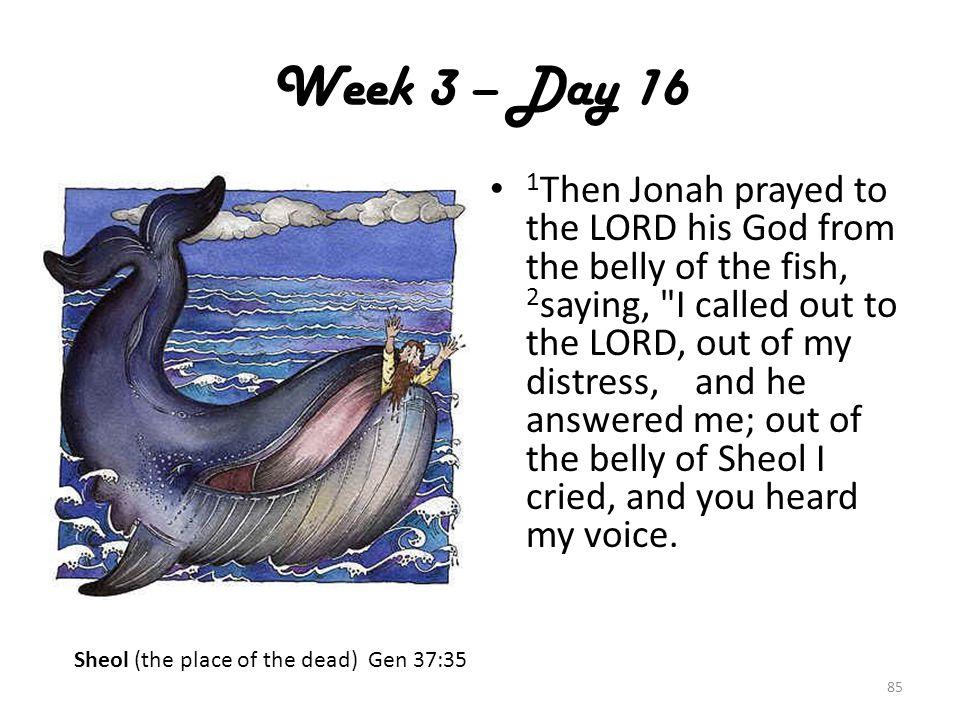 Week 3 – Day 16